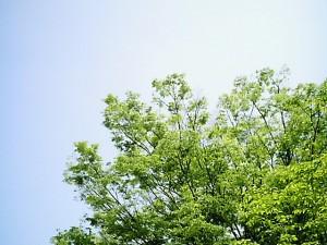 free_wood_031